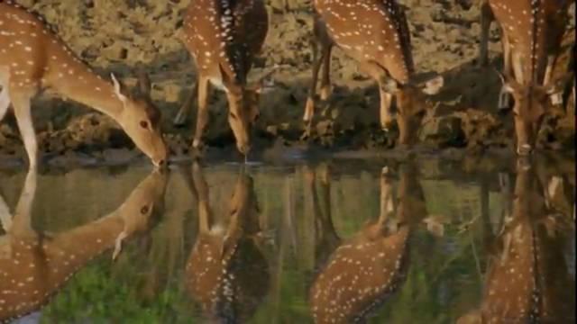 Deer at the Waterside
