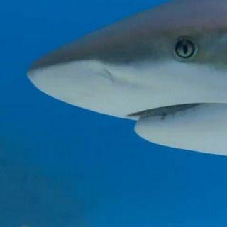 Sharkwater-01