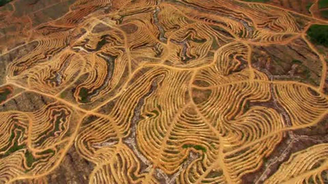 Devastated Forest Land in Borneo